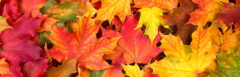 Zašto lišće ujesen mijenja boju?