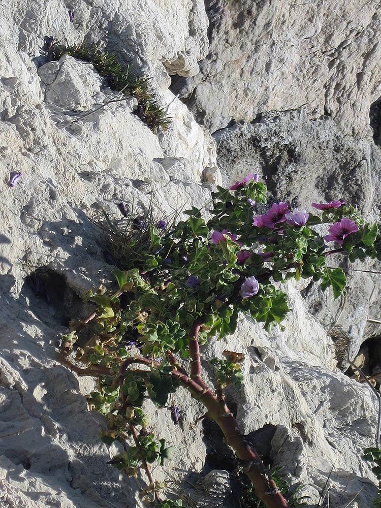 Stijena